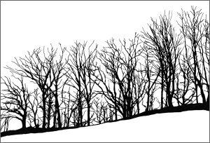 Deciduous Trees card