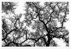 Under Oak